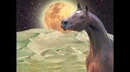 Animation Horses