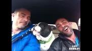 Куче пее заедно с двама човека!
