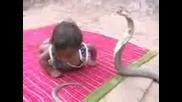Kobra hape dete