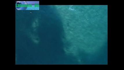 Борбата за живот в океана (high Quality) (bg аудио)