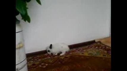 Малък Сладък Заек