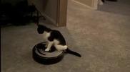 Котка се вози на прахосмукачка - робот