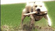 Страхотен е - Tret-style - Паркур куче от Украйна