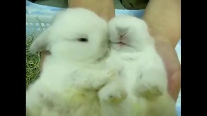 Сладки зайчета се целуват и гушкат!