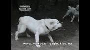 Охранителни кучета