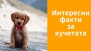 Интересни факти за кучетата
