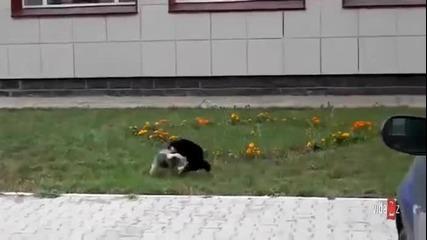 Котка срещу куче - много смях!