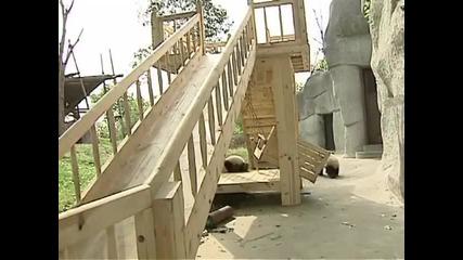 Сладки панди се спускат по пързалка