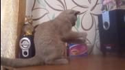 Котка танцува на dubstep!