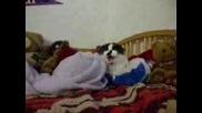 Котка Мрази Плюшени Играчки