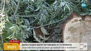 Дърво падна върху автомобил в Кранево и го премаза