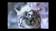 Whiskas Temptations - Christmas Treat Tv ad - 30 sec advert 2010