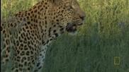 Ловът На Леопарда