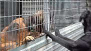 Spain: Animal shelter receives scores of pets evacuated after La Palma volcano eruption