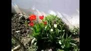 krasivi cvetq vav simitli (magdalena i gosho)