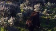 Защо мечките стоят на два крака ?