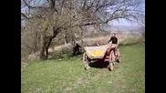 zayo vs mogare bik 2