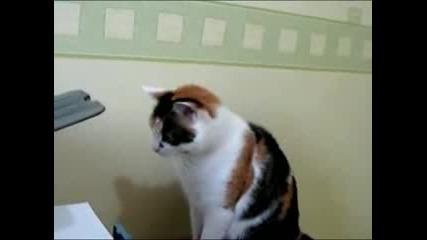 котка срещо принтер