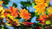Сигнал - Есенни изповеди