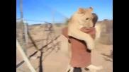 Лъвица прегръща стопанина си