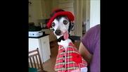 Запознайте се със Запа, кучето с изплезения език