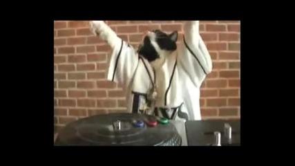 Котка миксира и денси на пулта