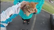 Мотоциклетистка спасява малка котка, която излезе на пътя