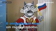 Котаракът Ахил с първа прогноза за мач от Мондиала в Русия
