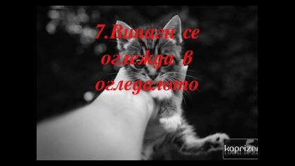 10 Неща,които прави една котка