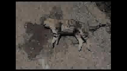 Cats Roadkill