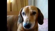Моето куче Томи!!!r.i.p.