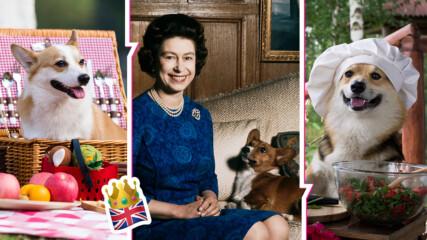 Говеждо, зайци, зеле: Ето какво е специалното меню за любимците на кралицата, кралските коргита