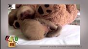 Пухести бебета
