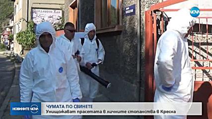 Нови случаи на африканска чума по свинете в Пловдивско и в Ловеч