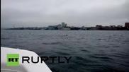 Russia: This crazy deer just SWAM to Vladivostok!