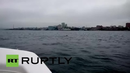 Russia: This crazy deer just SWAM to Vladivostok!
