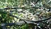 Orman Kacakcilarini Kesecem Keleseni Kasiycam Enselene Yanik Gumaya Kocacak Enseleri 2018 Hd