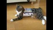 Японското коте Мару, което обича да се пъха в кутии