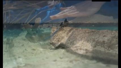 Злата Огневич - На Острове Любви