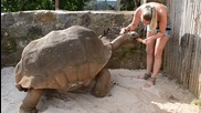Момиче храни огромна костенурка с диня