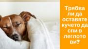 Трябва ли да оставяте кучето да спи в леглото ви?