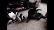 Dog Fighting Cat.flv