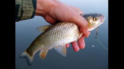 Spinning Fishing 2012