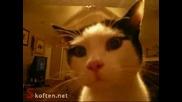 Коте с човешки потенциал