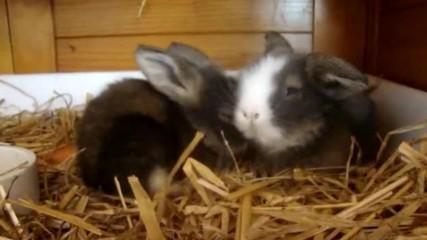 Рошави зайчета :)