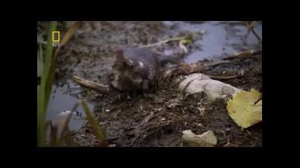 Дикая Природа России ~ Урал 1 част- National Geographic