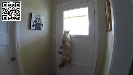 Котка намира хитър начин да гледа навън