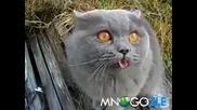 Много смях - Котка се оплаква на свой език