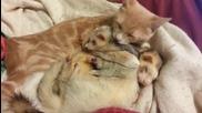 Котка и порчета спинкат заедно ..
