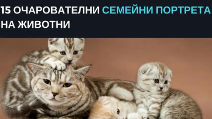 15 очарователни семейни портрета на животни